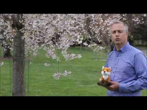 Risks Associated with Visual FoxPro - Macrosoft Inc